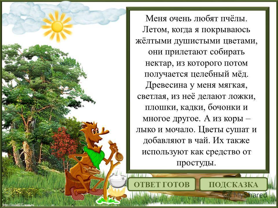 http://linda6035.ucoz.ru/ Меня очень любят пчёлы. Летом, когда я покрываюсь жёлтыми душистыми цветами, они прилетают собирать нектар, из которого потом получается целебный мёд. Древесина у меня мягкая, светлая, из неё делают ложки, плошки, кадки, боч