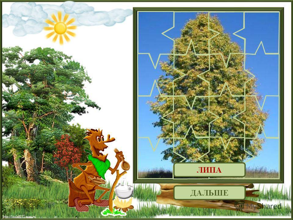 ДАЛЬШЕ ЛИПА http://linda6035.ucoz.ru/