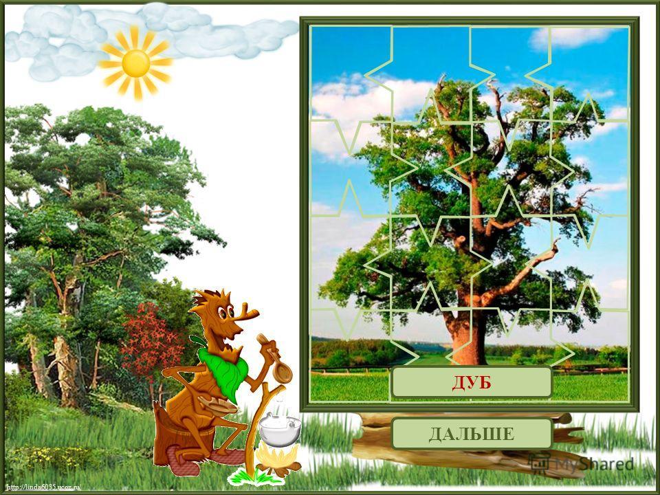 http://linda6035.ucoz.ru/ ДАЛЬШЕ ДУБ