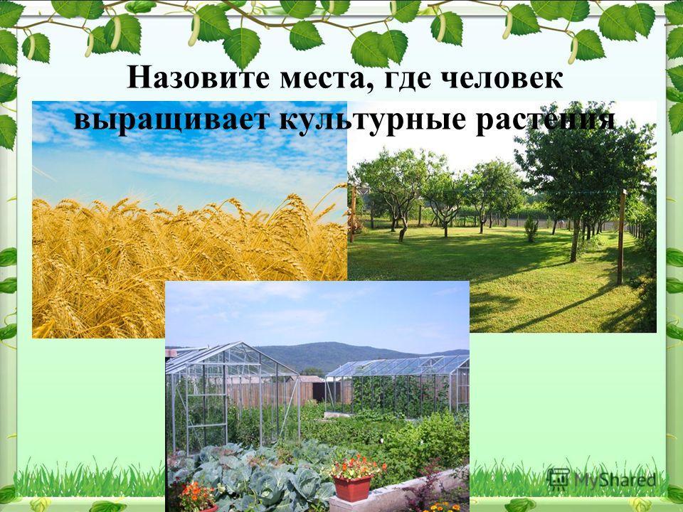 Назовите места, где человек выращивает культурные растения