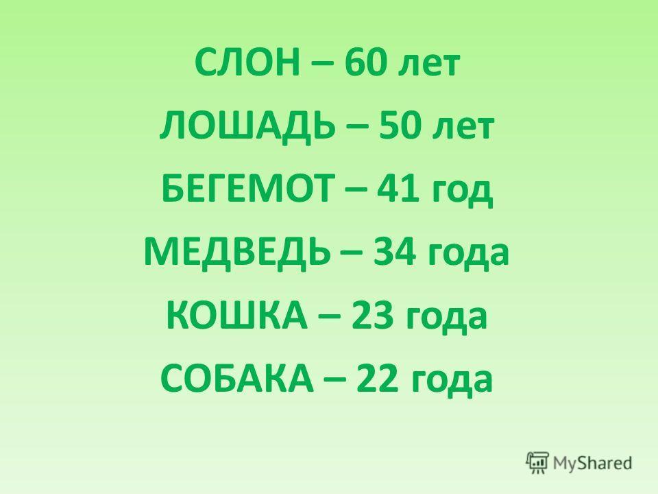 СЛОН – 60 лет ЛОШАДЬ – 50 лет БЕГЕМОТ – 41 год МЕДВЕДЬ – 34 года КОШКА – 23 года СОБАКА – 22 года