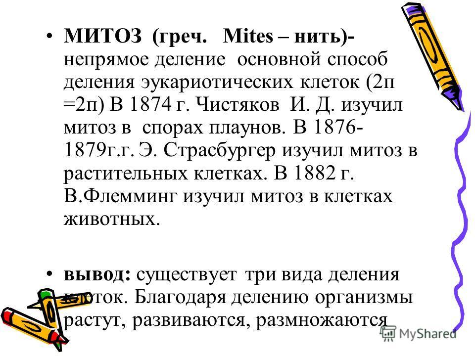 МИТОЗ (греч. Mites – нить)- непрямое деление основной способ деления эукариотических клеток (2 п =2 п) В 1874 г. Чистяков И. Д. изучил митоз в спорах плаунов. В 1876- 1879 г.г. Э. Страсбургер изучил митоз в растительных клетках. В 1882 г. В.Флемминг