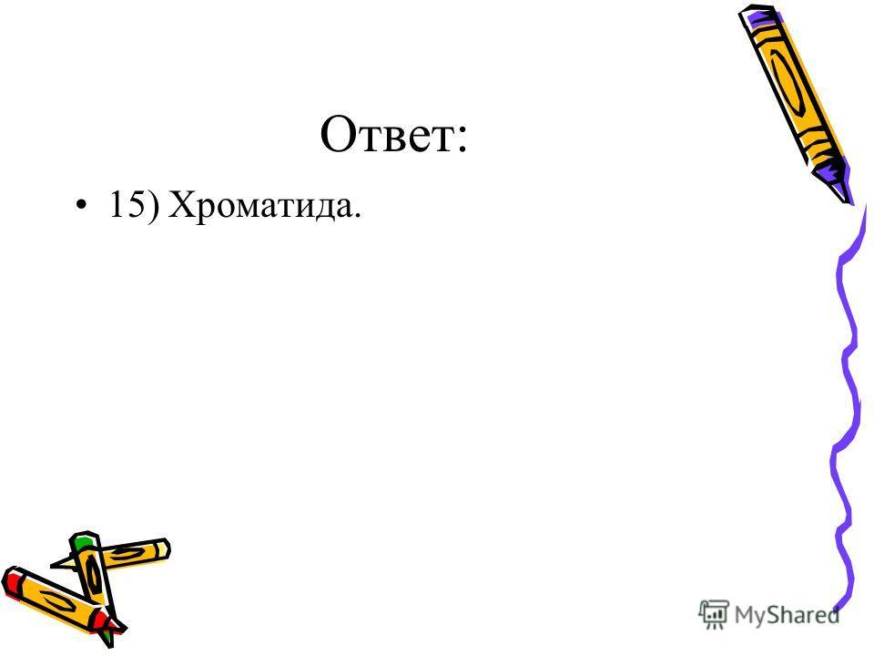 Ответ: 15) Хроматида.