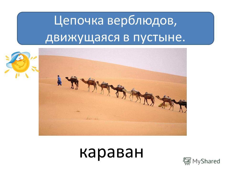 Цепочка верблюдов, движущаяся в пустыне. караван