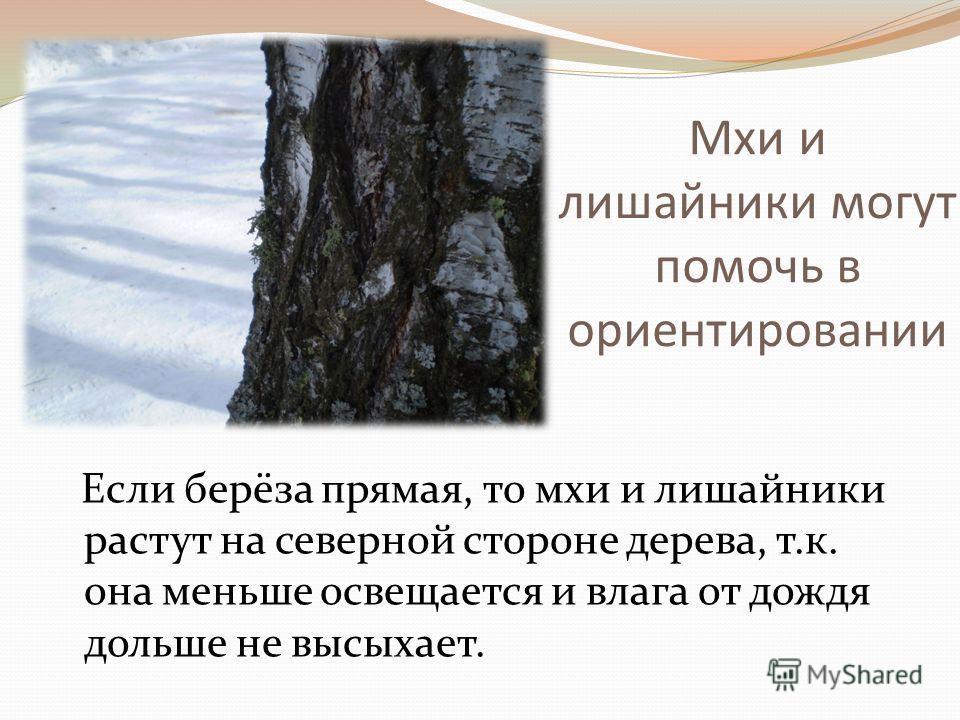 Мхи и лишайники могут помочь в ориентировании Если берёза прямая, то мхи и лишайники растут на северной стороне дерева, т.к. она меньше освещается и влага от дождя дольше не высыхает.