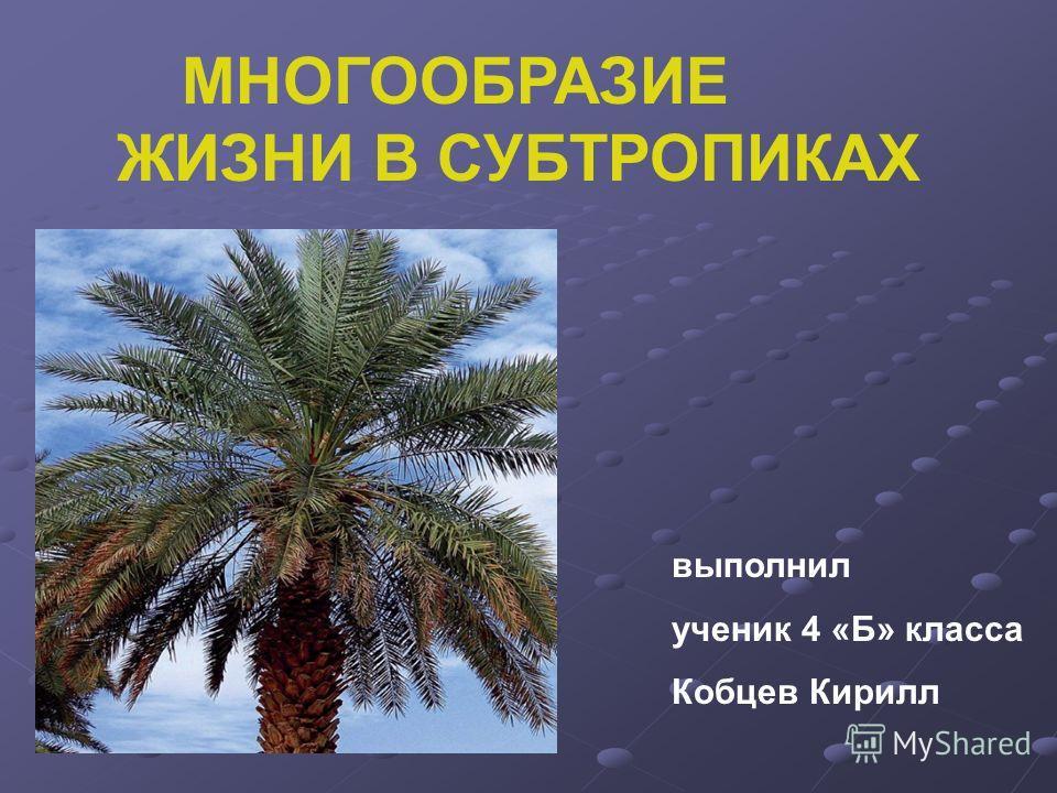 МНОГООБРАЗИЕ ЖИЗНИ В СУБТРОПИКАХ выполнил ученик 4 «Б» класса Кобцев Кирилл