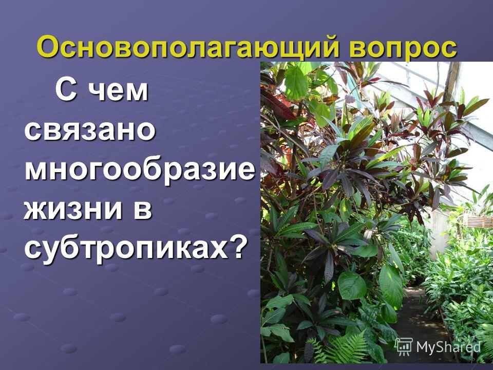 Основополагающий вопрос С чем связано многообразие жизни в субтропиках?