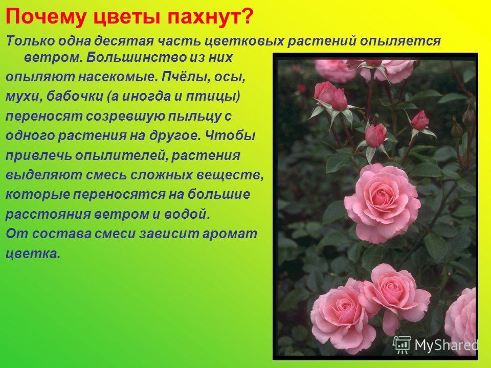 Почему цветы пахнут? Только одна десятая часть цветковых растений опыляется ветром. Большинство из них опыляют насекомые. Пчёлы, осы, мухи, бабочки (а иногда и птицы) переносят созревшую пыльцу с одного растения на другое. Чтобы привлечь опылителей,