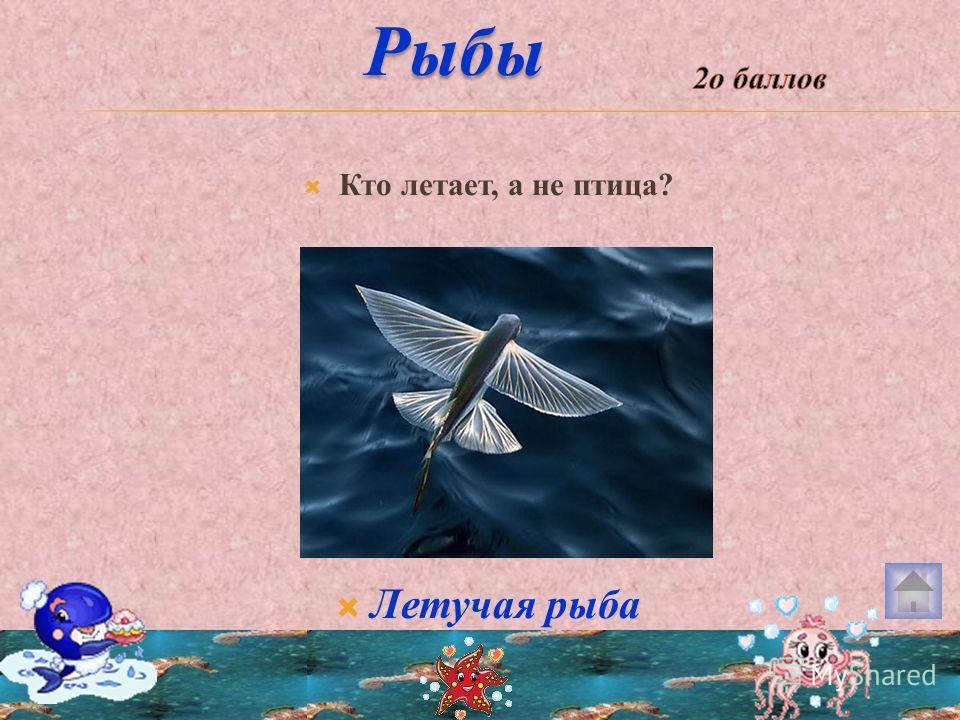 Кто летает, а не птица? Летучая рыба Рыбы Рыбы