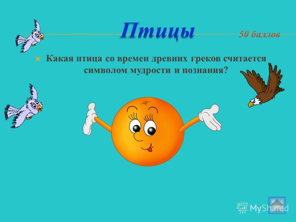 Какая птица со времен древних греков считается символом мудрости и познания?