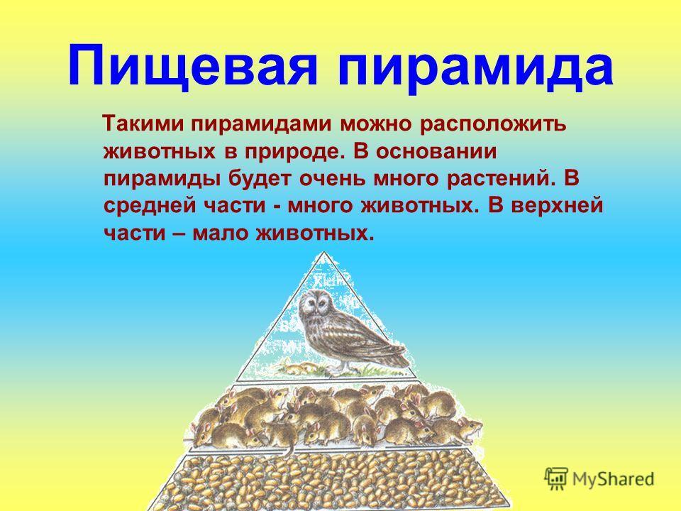 Пищевая пирамида Такими пирамидами можно расположить животных в природе. В основании пирамиды будет очень много растений. В средней части - много животных. В верхней части – мало животных.