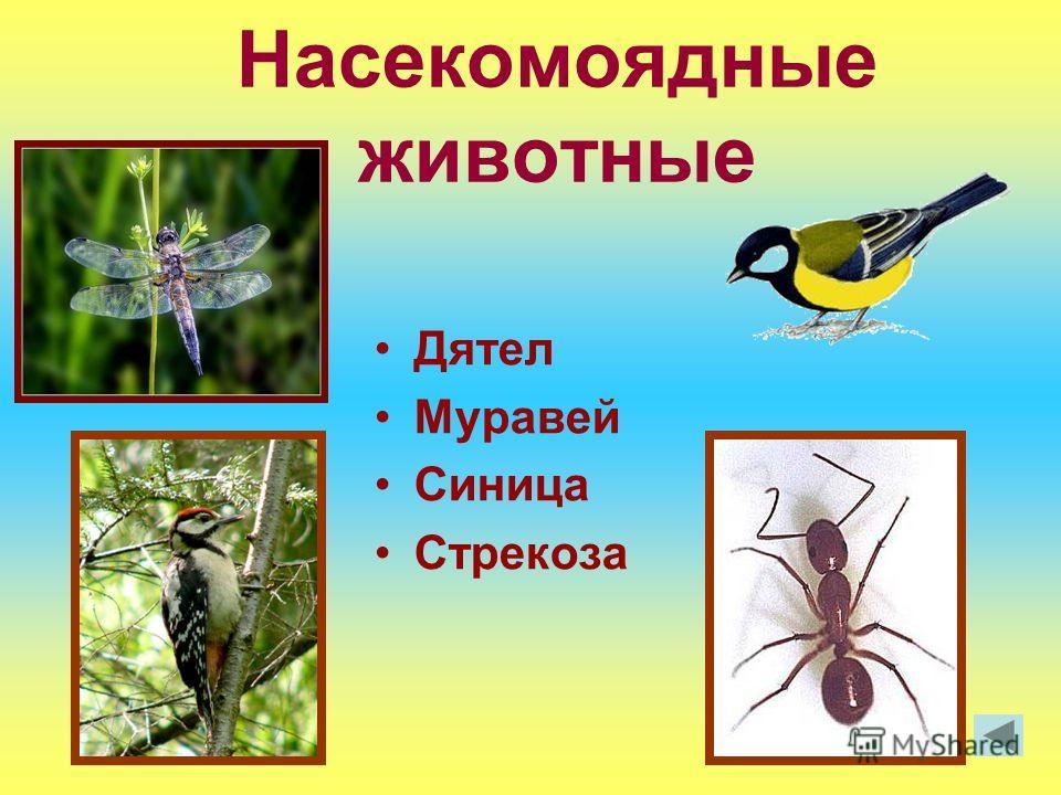 Насекомоядные животные Дятел Муравей Синица Стрекоза