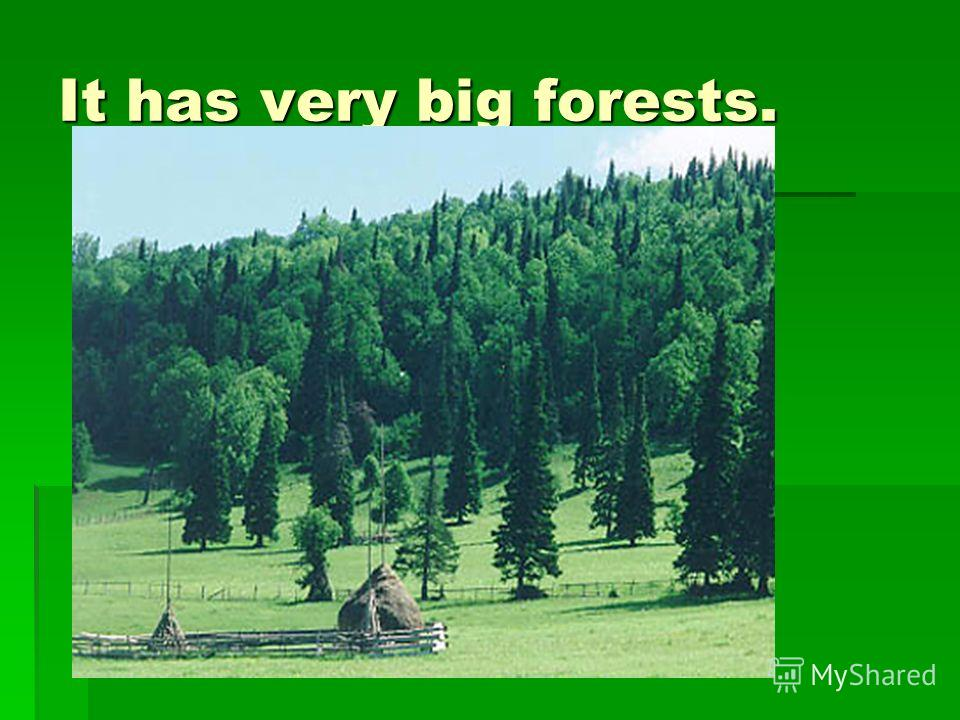 It has very big forests.
