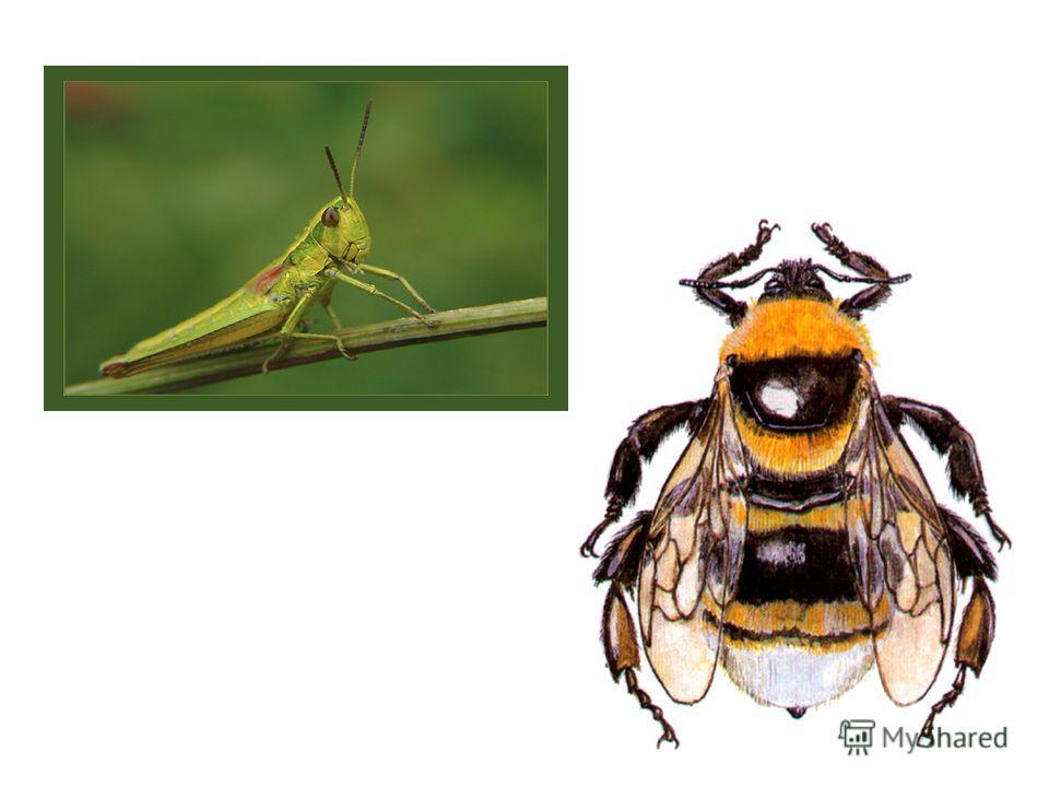Назови насекомых