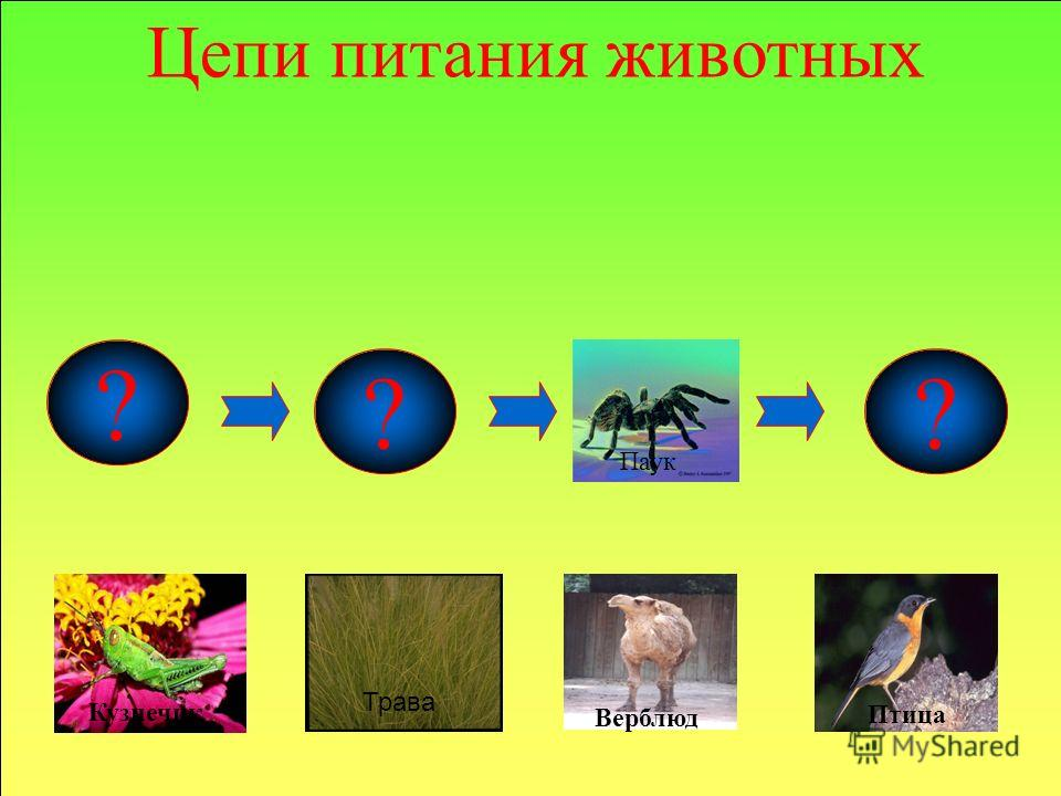 Муха-цокотуха К.И.Чуковский