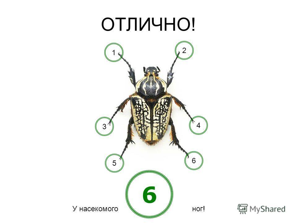 А сколько ног должно быть у насекомого? 684 КУЗНЕЧИКМУРАВЕЙ ПЧЕЛА