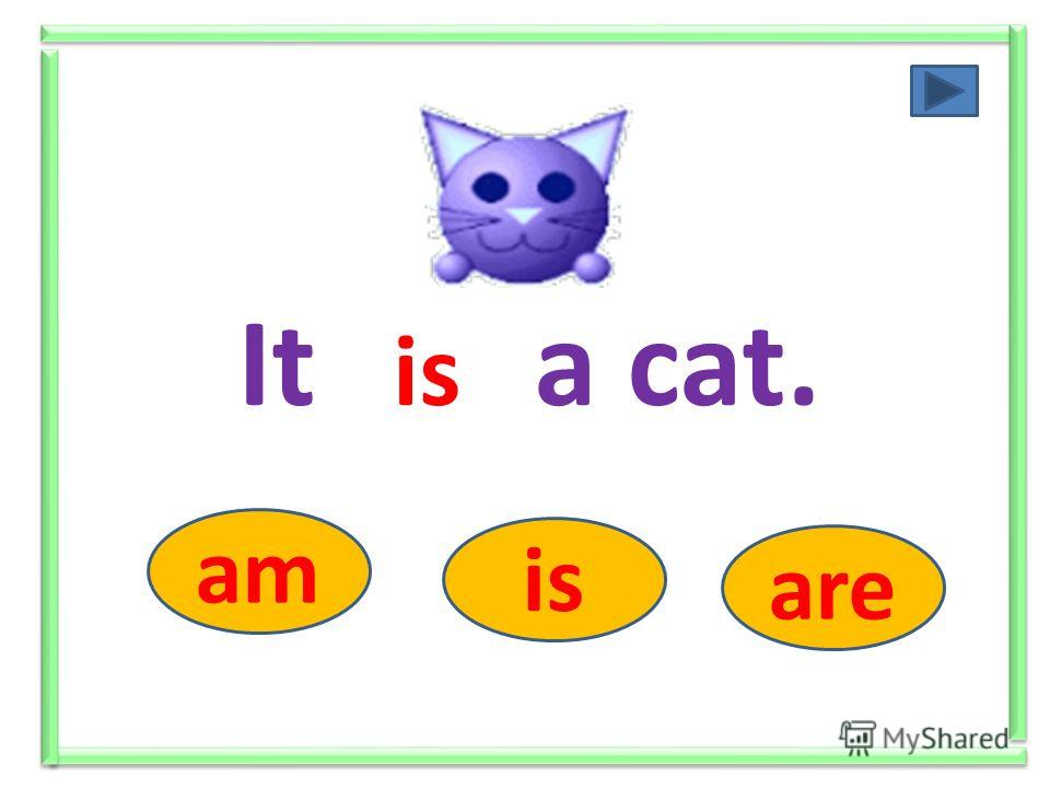 They ….. cats. am is are