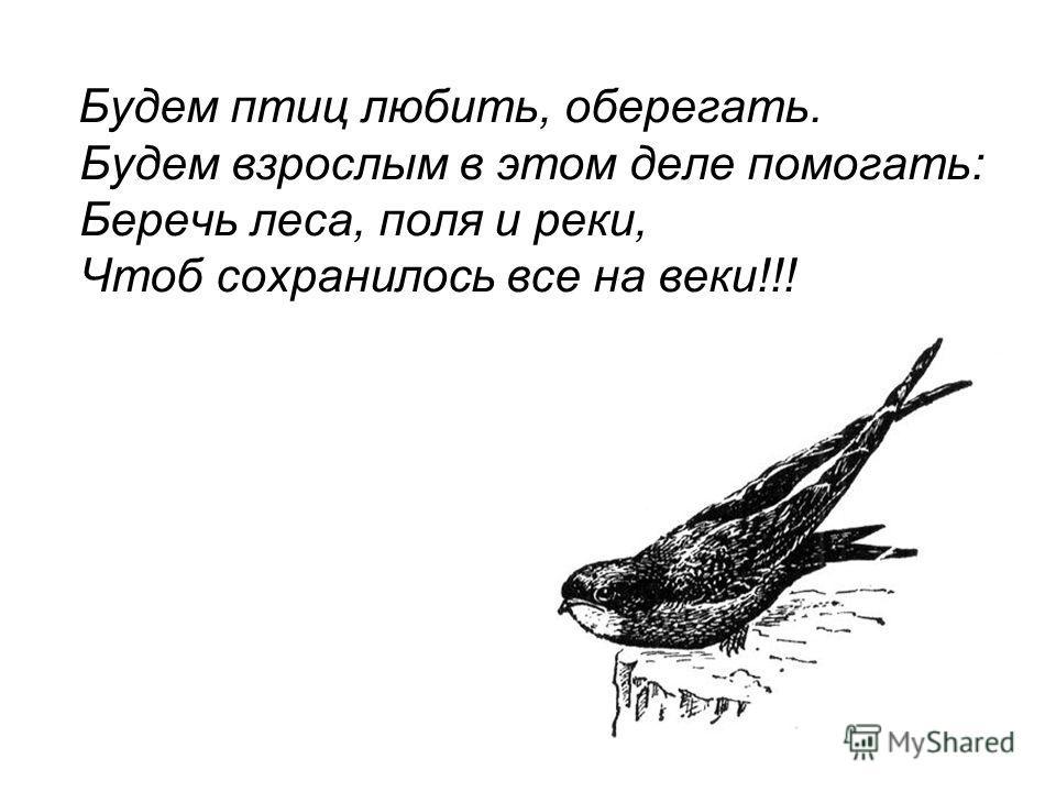 Будем птиц любить, оберегать. Будем взрослым в этом деле помогать: Беречь леса, поля и реки, Чтоб сохранилось все на веки!!!