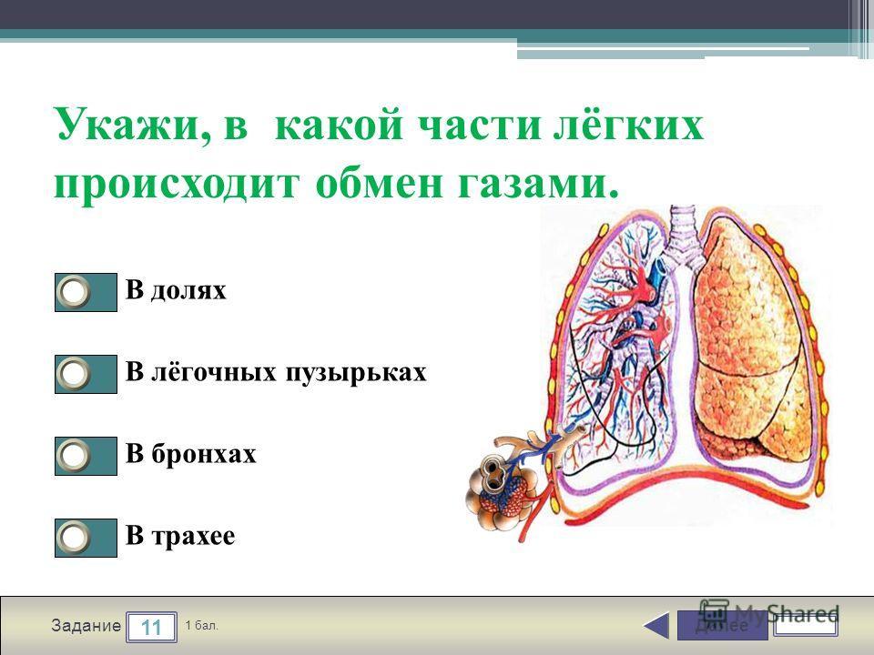 Далее 11 Задание 1 бал. Укажи, в какой части лёгких происходит обмен газами. В долях В лёгочных пузырьках В бронхах В трахее
