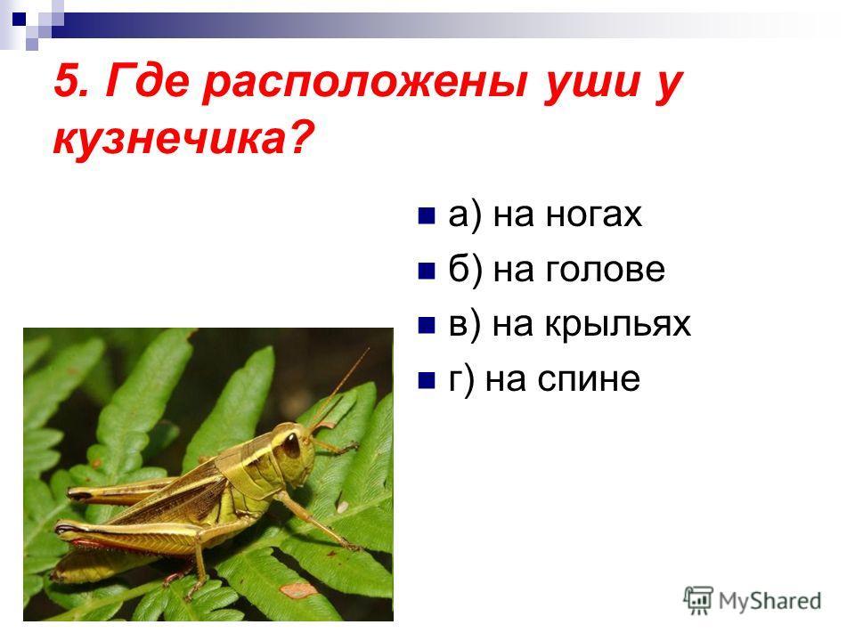 5. Где расположены уши у кузнечика? а) на ногах б) на голове в) на крыльях г) на спине