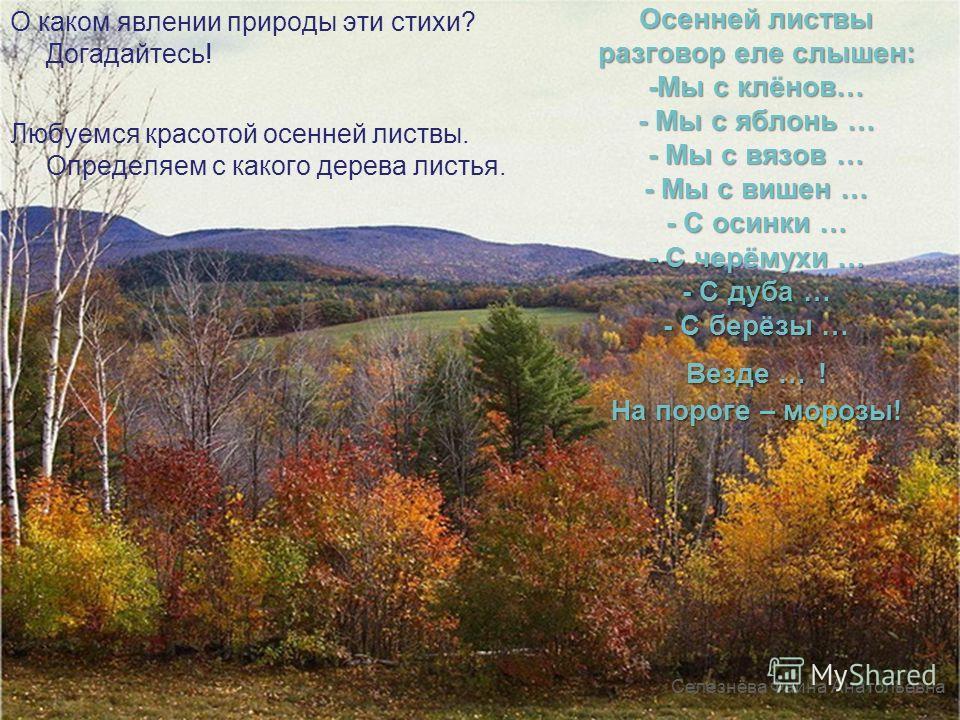 Осенней листвы разговор еле слышен: -Мы с клёнов… - Мы с яблонь … - Мы с вязов … - Мы с вишен … - С осинки … - С черёмухи … - С дуба … - С берёзы … Везде … ! На пороге – морозы! Селезнёва Фаина Анатольевна Любуемся красотой осенней листвы. Определяем