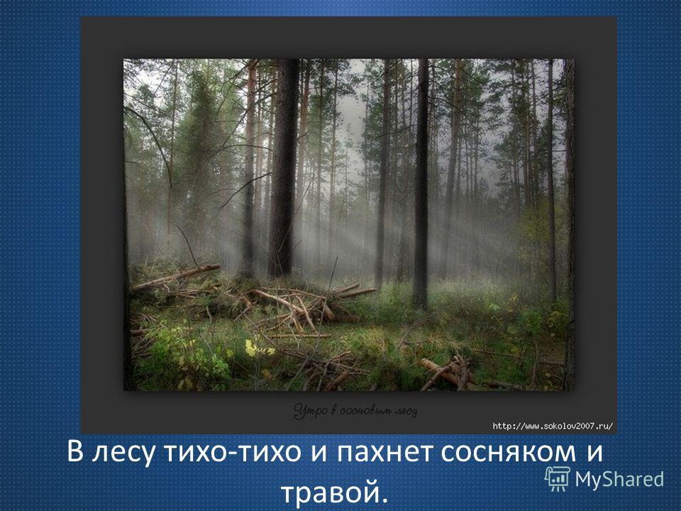 В лесу тихо-тихо и пахнет сосняком и травой.