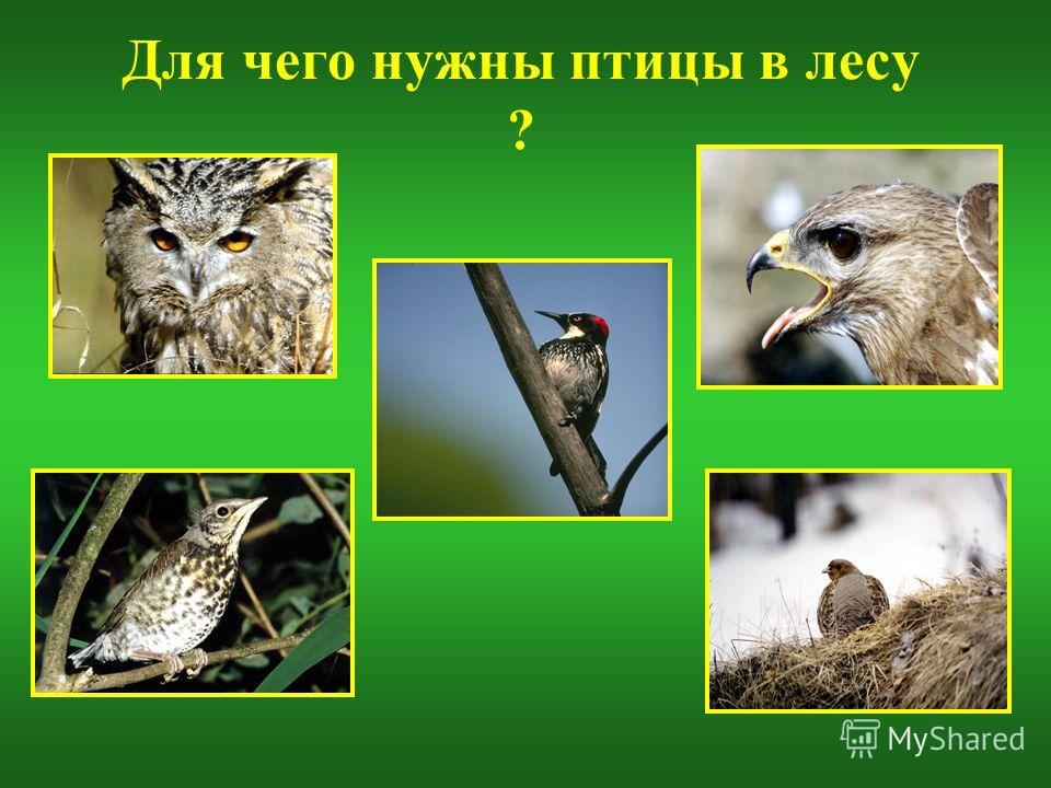 Для чего нужны птицы в лесу ?
