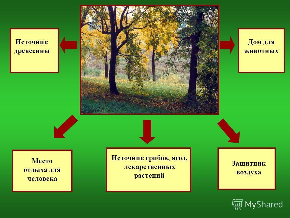 Источник древесины Место отдыха для человека Источник грибов, ягод, лекарственных растений Дом для животных Защитник воздуха