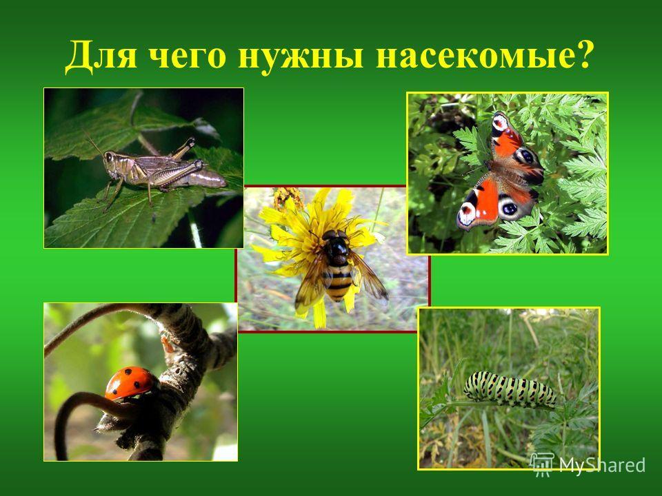 Для чего нужны насекомые?