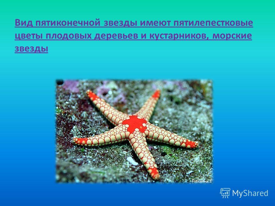 Вид пятиконечной звезды имеют пятилепестковые цветы плодовых деревьев и кустарников, морские звезды