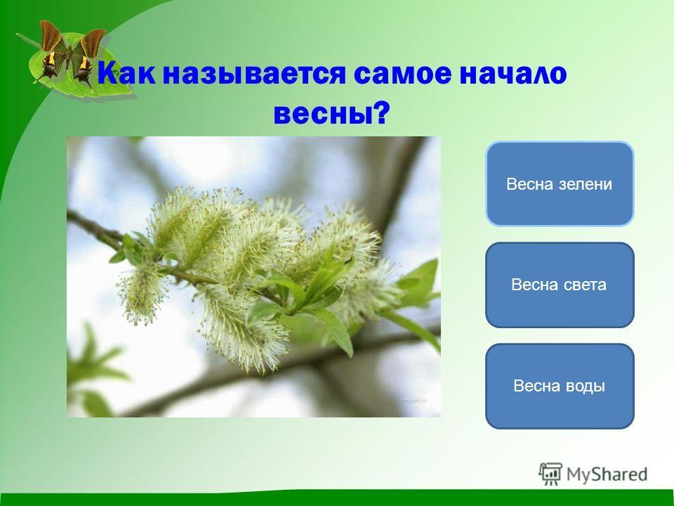 Как называется самое начало весны? Весна света Весна воды Весна зелени