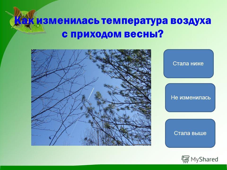 Как изменилась температура воздуха с приходом весны? Стала выше Стала ниже Не изменилась