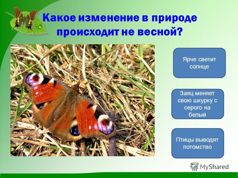 Какое изменение в природе происходит не весной? Заяц меняет свою шкурку с серого на белый Птицы выводят потомство Ярче светит солнце