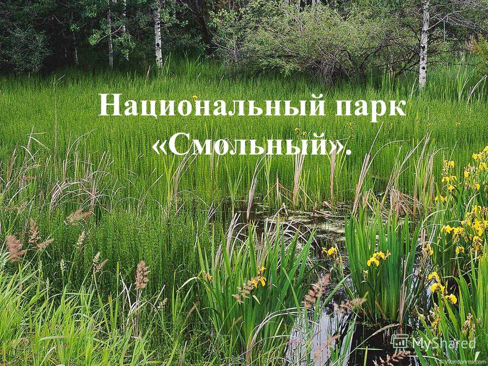 Национальный парк «Смольный».