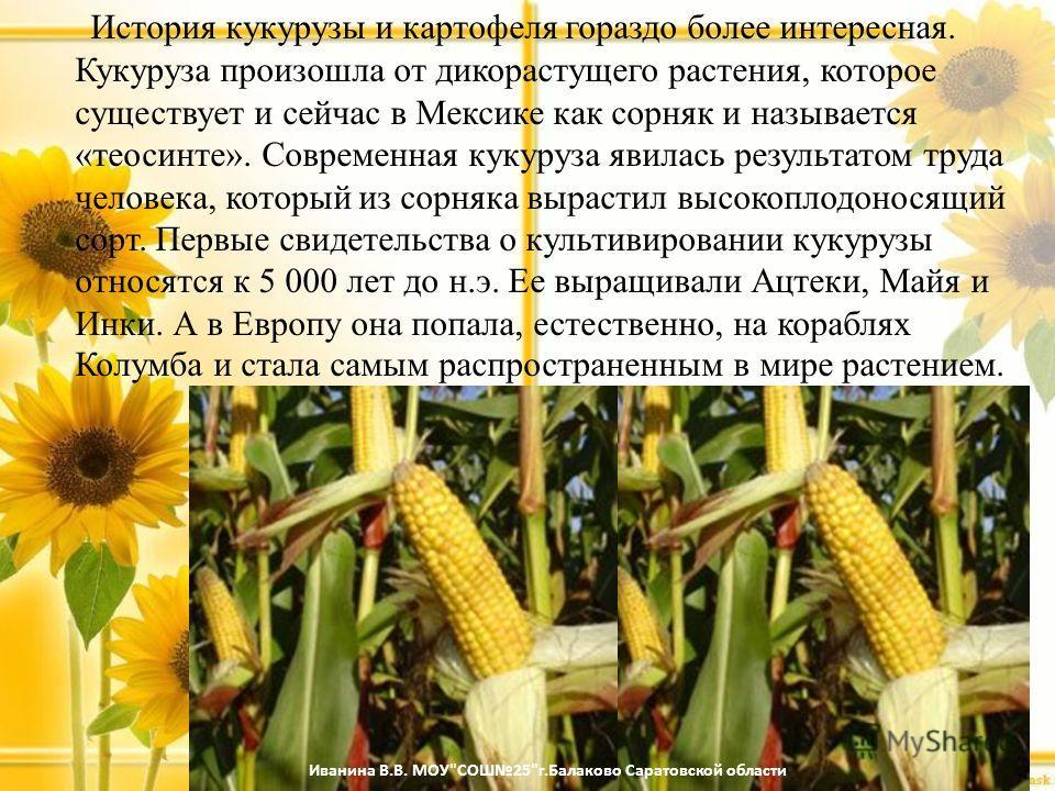 История кукурузы и картофеля гораздо более интересная. Кукуруза произошла от дикорастущего растения, которое существует и сейчас в Мексике как сорняк и называется «теосинте». Современная кукуруза явилась результатом труда человека, который из сорняка