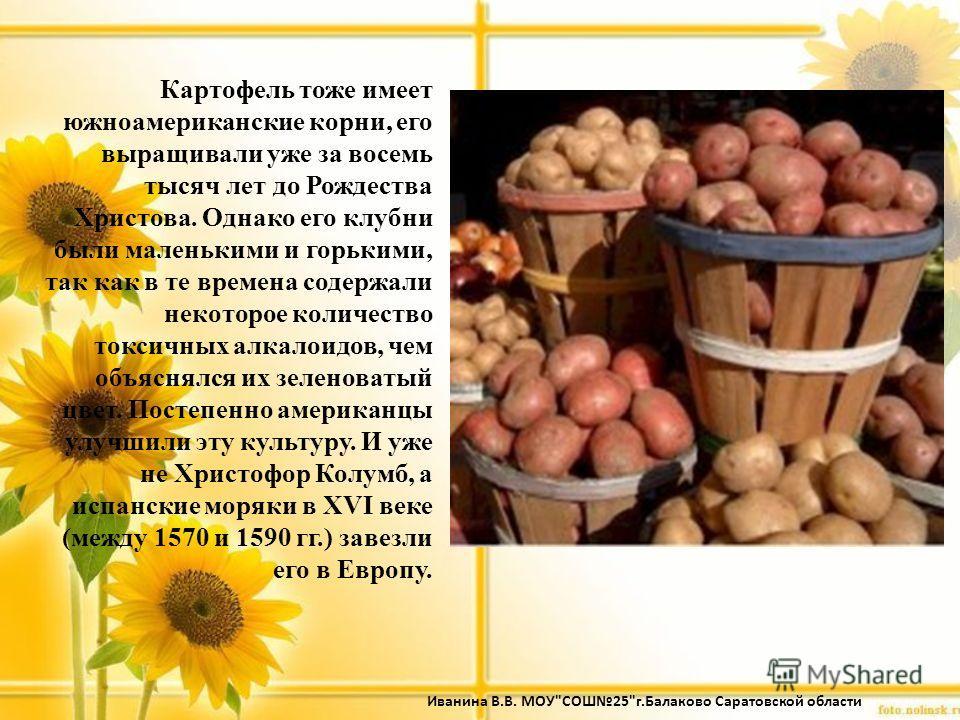 Картофель тоже имеет южноамериканские корни, его выращивали уже за восемь тысяч лет до Рождества Христова. Однако его клубни были маленькими и горькими, так как в те времена содержали некоторое количество токсичных алкалоидов, чем объяснялся их зелен