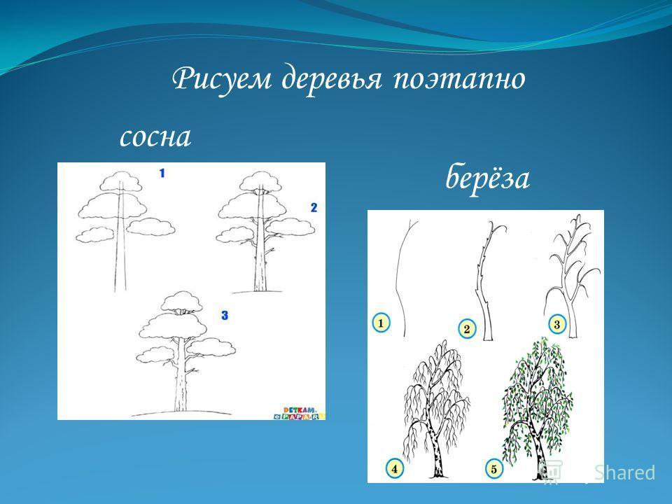 Рисуем деревья поэтапно сосна берёза