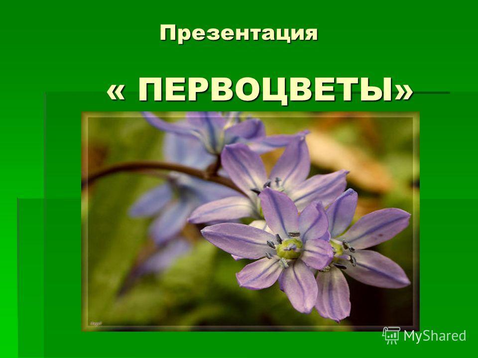 Презентация « ПЕРВОЦВЕТЫ»