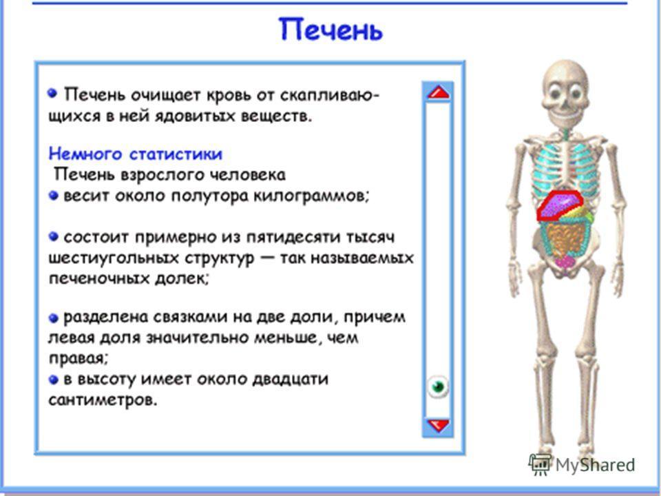 school-collection.edu.ru - Единая коллекция