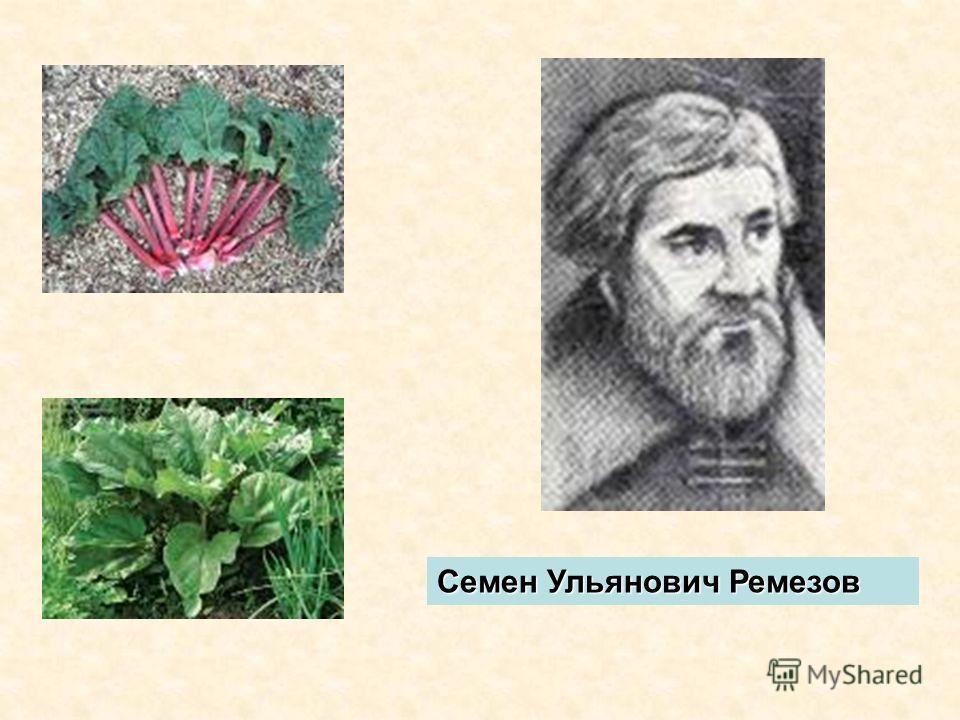 Семен Ульянович Ремезов