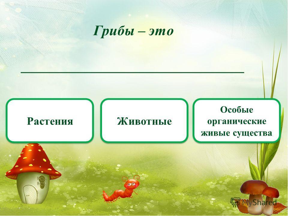 Грибы – это _______________________________ Растения Животные Особые органические живые существа
