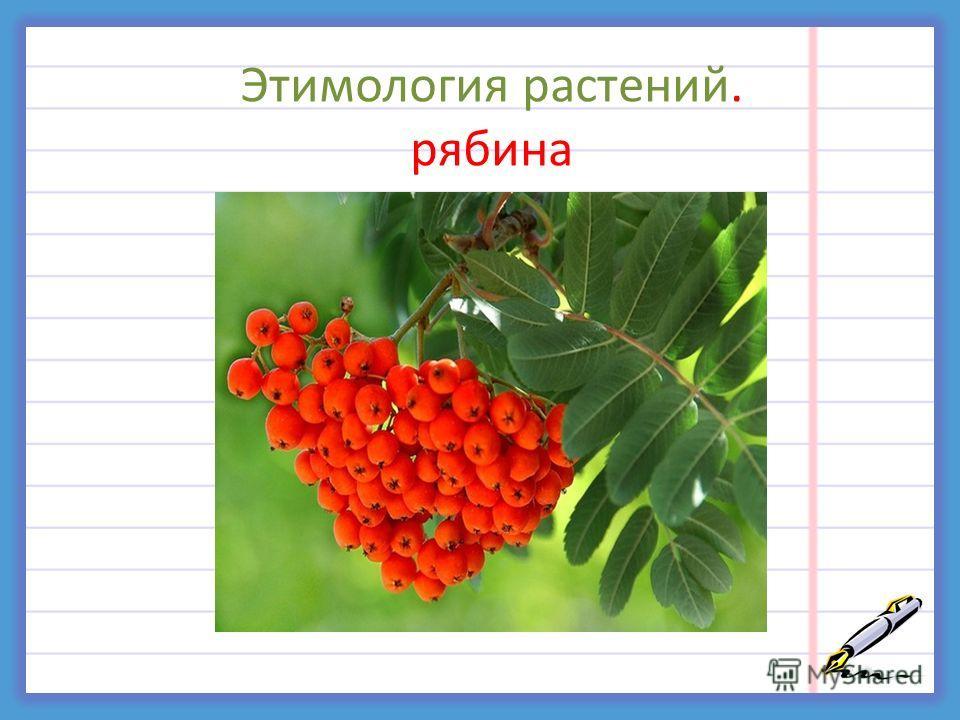 Этимология растений. рябина р