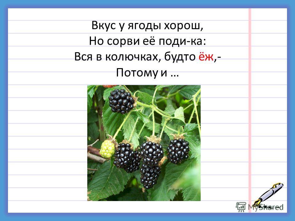 Вкус у ягоды хорош, Но сорви её поди-ка: Вся в колючках, будто ёж,- Потому и …