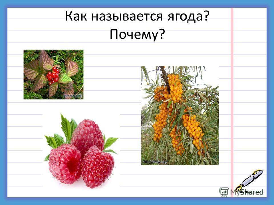 Как называется ягода? Почему?