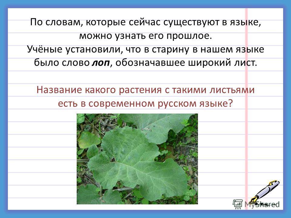 По словам, которые сейчас существуют в языке, можно узнать его прошлое. Учёные установили, что в старину в нашем языке было слово лоп, обозначавшее широкий лист. Название какого растения с такими листьями есть в современном русском языке?