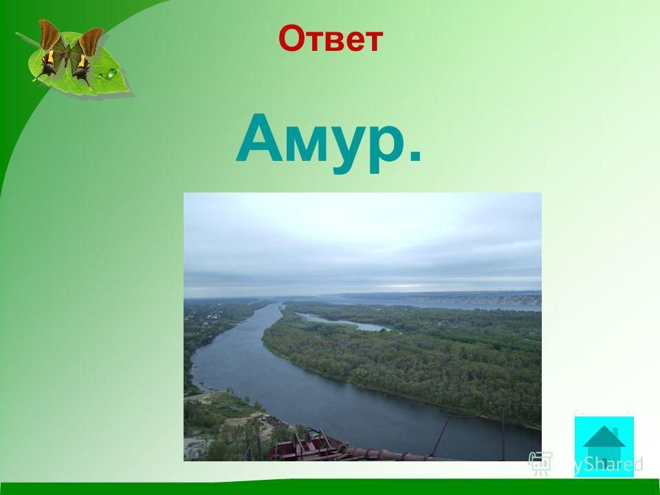 вопрос Самая длинная река России? ответ