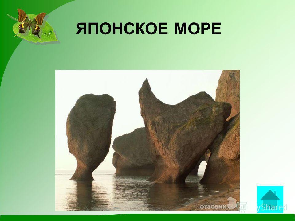 ВОПРОС С 1978 года в бухте Петра Великого этого моря расположен единственный морской заповедник России. ответ