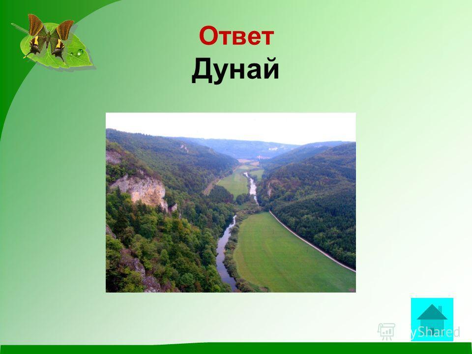 ВОПРОС Назови лишнее Амур,Волга,Дунай,Дон,Енисей ответ