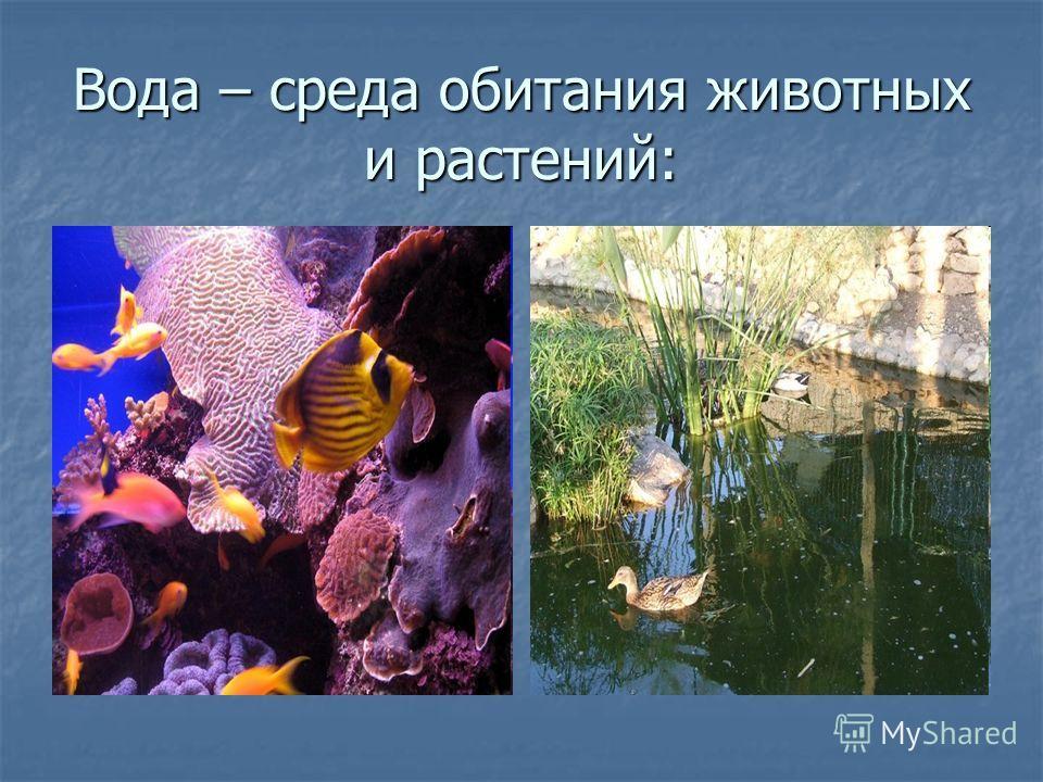 Вода – среда обитания животных и растений: