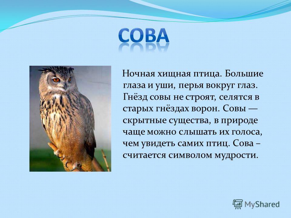 Ночная хищная птица. Большие глаза и уши, перья вокруг глаз. Гнёзд совы не строят, селятся в старых гнёздах ворон. Совы скрытные существа, в природе чаще можно слышать их голоса, чем увидеть самих птиц. Сова – считается символом мудрости.